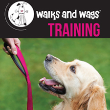Walks & Wags Training Brochure